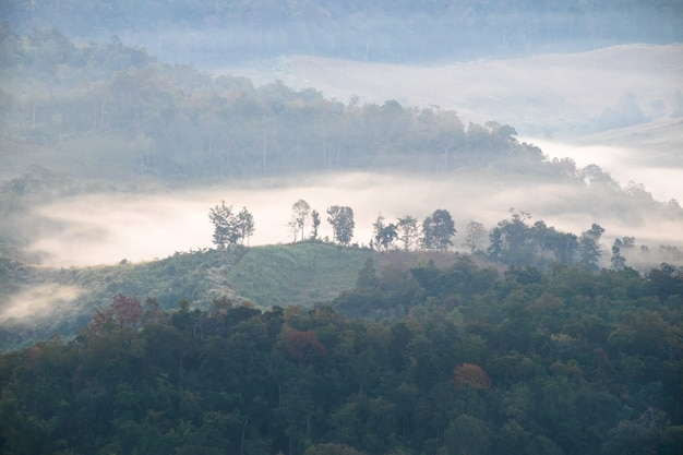 Дерево на холме в тумане на рассвете, бан-джабо, мэ хонг сон, таиланд