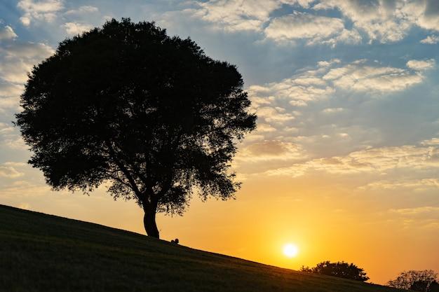 극적인 석양과 푸른 하늘 언덕에 나무.