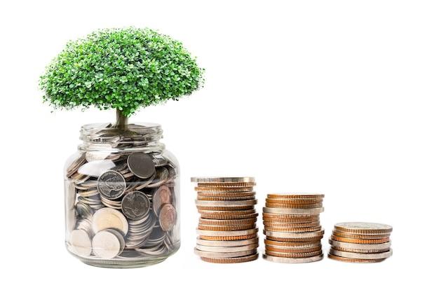 저축 돈 동전에 나무