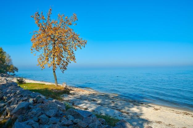 해변에 나무