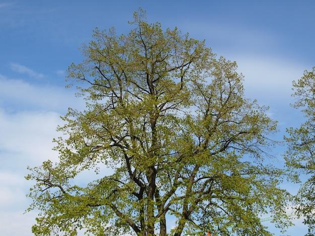 푸른 하늘 위에 나무