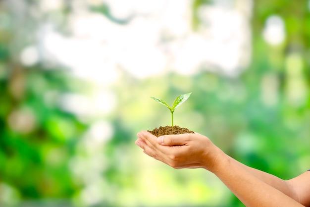 식물 성장과 환경 보호의 자연 녹색 배경 개념으로 인간의 손에 심은 나무.