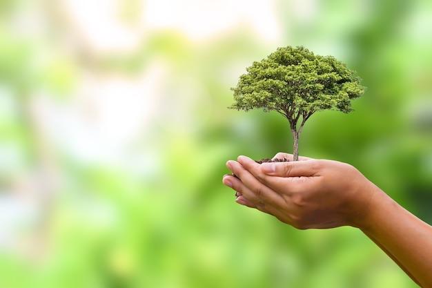 자연 녹색 배경을 가진 인간의 손에 심은 나무. 세계 환경의 날 식물 성장과 환경 보호의 개념
