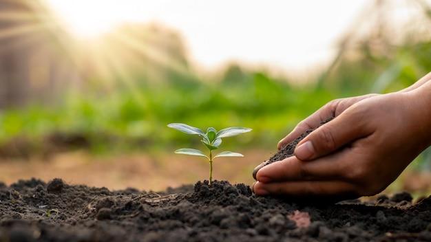 농부가 손으로 나무를 심는 것을 포함하여 나무 심기 및 나무 심기, 식물 성장 아이디어.