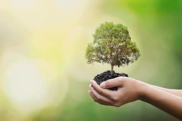 Посадка деревьев руками волонтеров в рамках концепции кампании экологической и корпоративной социальной ответственности