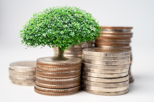 Tree plumule leaf on save money coins, business finance saving banking investment concept.