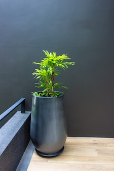 A tree in a pot on a gray concrete wall.