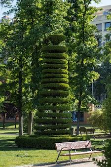 特別な形で剪定された樹木