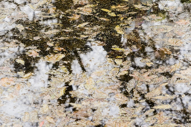 Tree reflection on water with autumn leaves