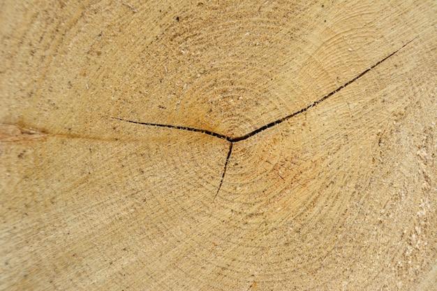 나무 링 통나무. 금이 가고 거친 표면을 가진 천연 유기 질감. 균열이 있는 끝 절단된 나무 나무 단면의 클로즈업 매크로 보기. 연륜이 있는 나무 표면.