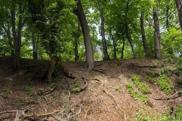 계곡의 경사면에 나무 뿌리
