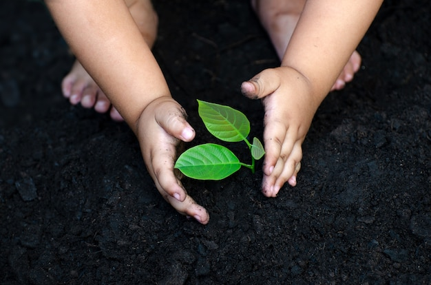 Tree sapling baby hand on the dark ground, the concept implanted children's