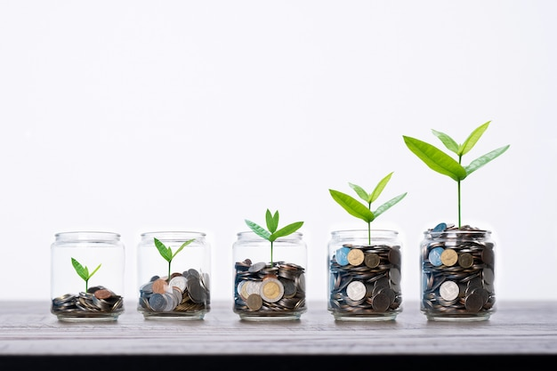 Tree and sapling growing up frome coins money in glass of jar on wood table, increasing and save finance concept