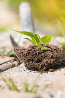 나무 묘목은 작은 삽의 토양에서 자랍니다. 정원에서 일하세요. 성장 개념입니다. 시골 생활. 생활 개념입니다.