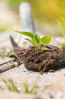 Tree seedling grow in soil on a small shovel. work in the garden. grow concept. rural life. life concept.