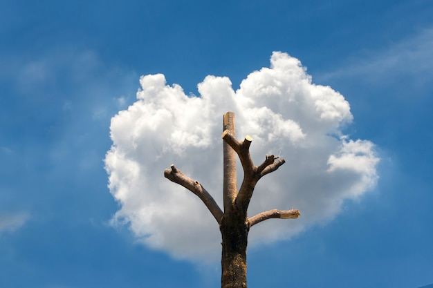 Tree shape from the tree stump and clouds.