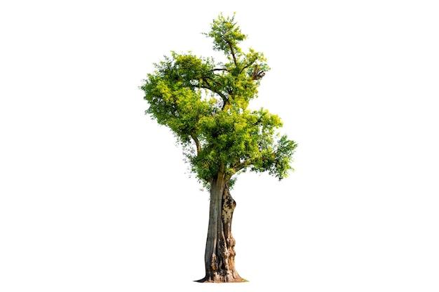 나무 관목 정원 장식 흰색 배경