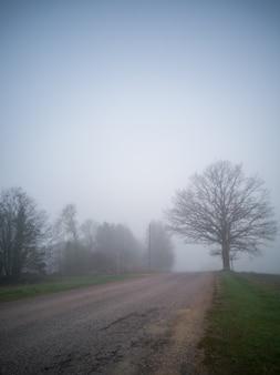 Силуэт дерева в густом тумане у дороги, moody photo