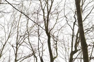 Tree silhouette  nature