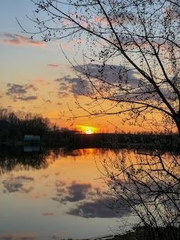 Силуэт дерева над озером с оранжевым светом заката на горизонте