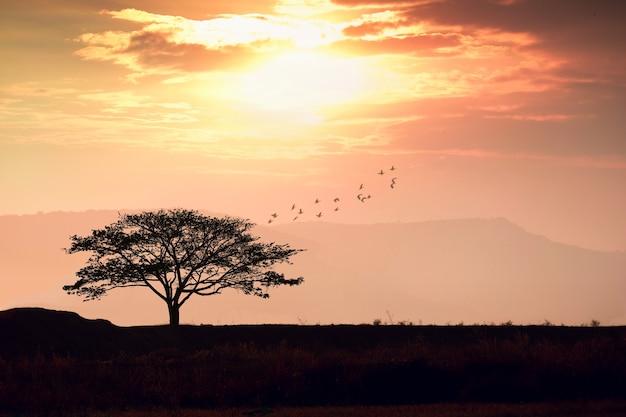 Силуэт дерева с оранжевым закатом солнца