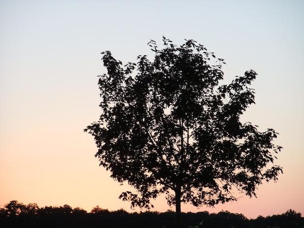 夕焼け空にシルエットの木