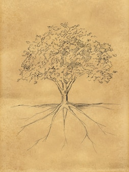 Tree Sketch leaves and root on paper