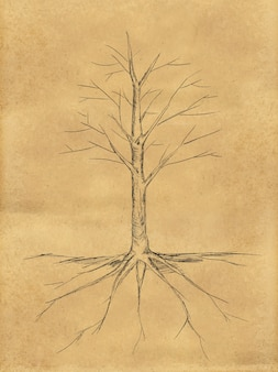 Tree sketch no leaves root on paper