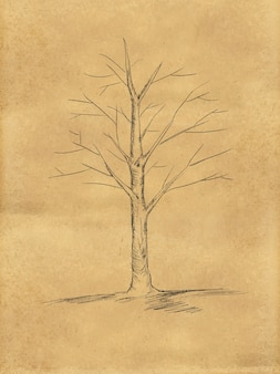 Tree sketch without leaves on paper
