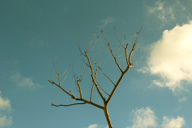 Tree in the sky