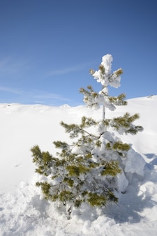 Tree in the snow, winter on the alps