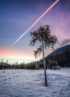 Tree on snowy forest clearing under clear sky