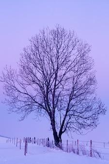 Tree on snowy hill, bavaria, germany