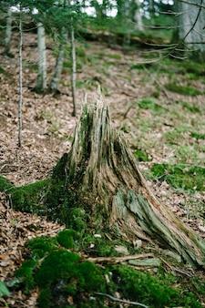 Пень, покрытый мхом в осеннем лесу