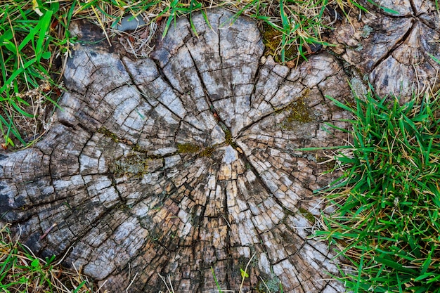 Tree stump on the green grass top view