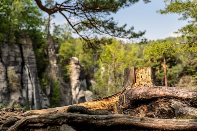 Пень в скалистых горах, европа Premium Фотографии