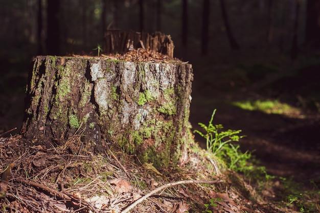 숲 클로즈업에서 나무 그 루터 기 숲에서 이끼로 덮여.