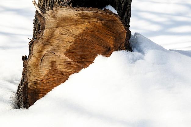 雪の背景の木の切り株