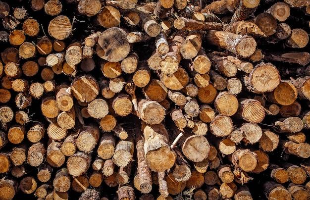 Пень, бревна в текстуре дерева