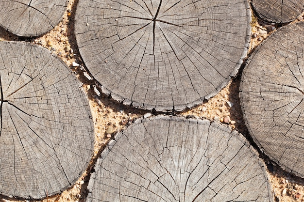 Tree stumps background trees cut section wood texture of cute tree trunk. slices in the sand