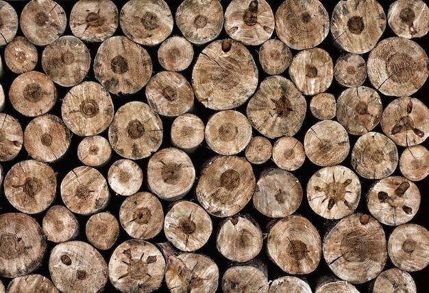 나무 그루터기가 자연 배경으로 전체 화면