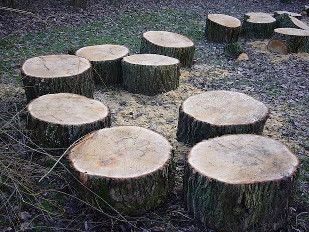 Tree stumps grates bark sawn
