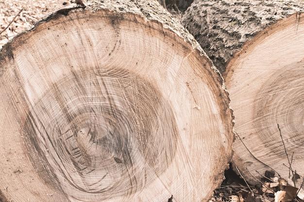 森の中の木の切り株