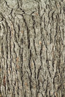 Tree surface wooden texture background