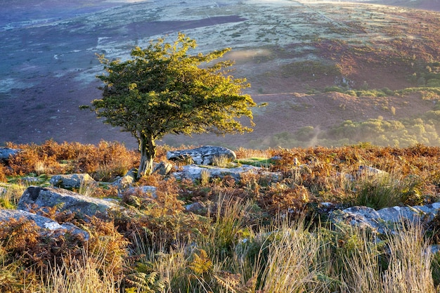 Tree surrounded by greenery under the sunlight in the dartmoor national park, devon, the uk