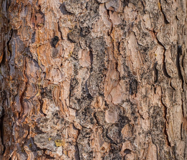 Tree texture background with brown and orange tone