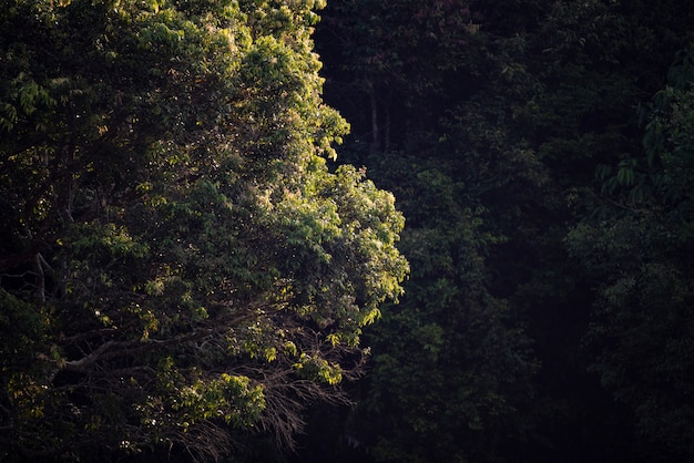 Tree in tropical forest