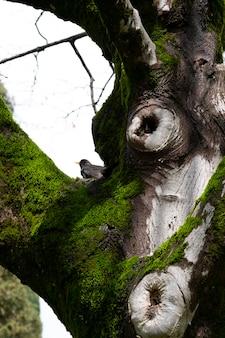 Ствол дерева и мох в лесу. маленькая птичка на заднем плане, размытый фокус