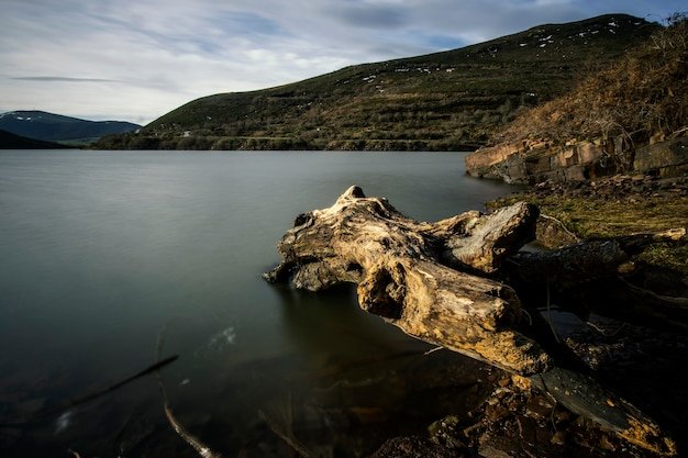Tree trunk in a calm lake in winter, in cantabria, north spain
