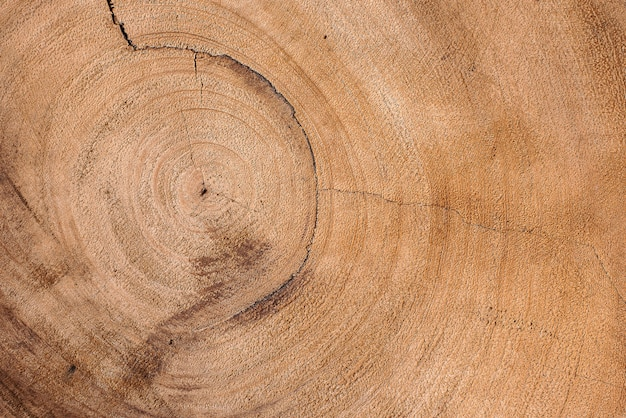Tree trunk cut in half. wood texture